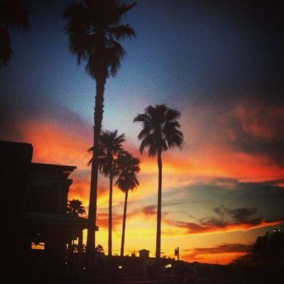 Arizona Phoenix Palmtrees