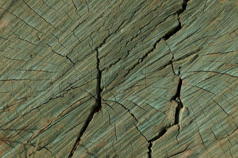 Full Frame Backgrounds Textured  Pattern Cracked No People Close-up Rough Plant Tree Nature Wood - Material Outdoors Natural Pattern Tree Ring Trunk