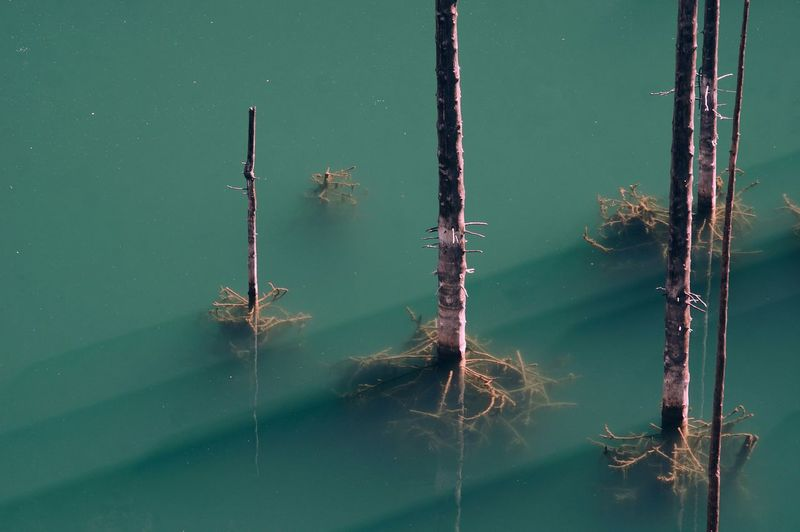 High angle view of plant stems in lake