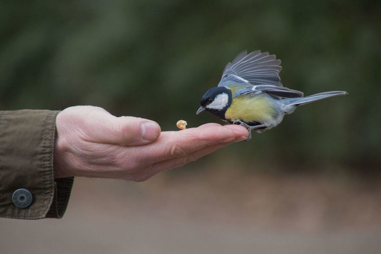 Close-up of bird perching on hand