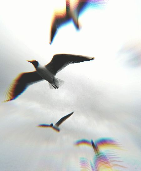 Dreaming DreamChaser Dreamy Feeling Dreamy Taking Photos Magic Sky Light And Magic Check This Out Fly Bird Fly Fly Away