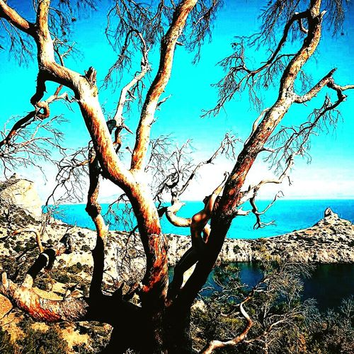 Black sea😍 Day Outdoors Sea Water Nature Tree Sky No People Beauty In Nature Close-up