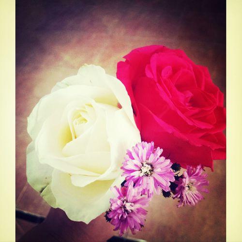 ♥♥ Beautiful Flowers for Beautiful Bride ♥♥