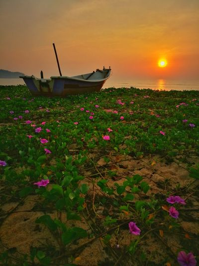 Sunday Morning HuaweiP9 Pink Flower Pink Sunrise Sun Sunlight Beach Seascape Landscape Boat Fisherman Boat Village Terengganu Bali Thailand Crawling Tree Flower Water Nautical Vessel Flower Head Sea Dawn Sunset Beauty Rural Scene Water Lily Blooming Lily Wildflower Petal