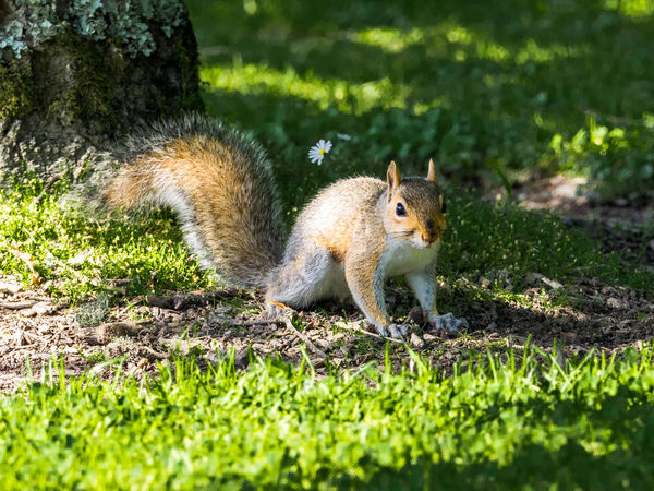 Animal Animal Themes Animal Wildlife Animals In The Wild Close-up Colourful Day EyEmNewHere Furry Furry Friend Grass Gray Squirrel Green Color Grey Squirrel Mammal Nature No People One Animal Outdoors Squirrel Wildlife