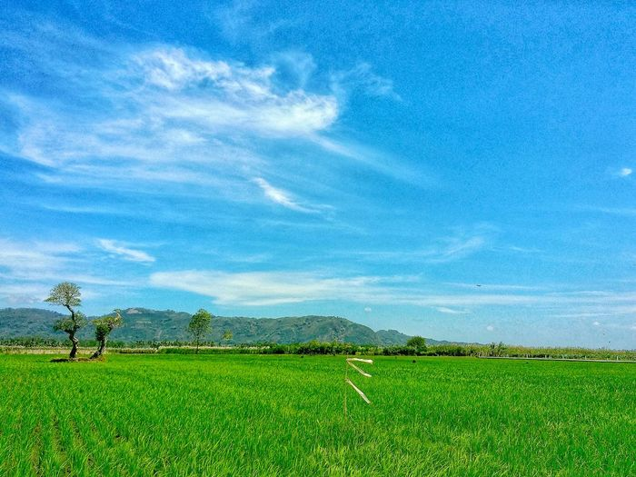 Rural Scene Irrigation Equipment Tree Agriculture Tea Crop Field Crop  Sky Landscape Green Color Rice Paddy Cultivated Land Plantation Farmland Agricultural Field