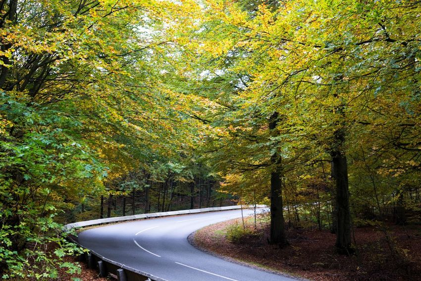 Autumn Beauty In Nature Change Country Road Curve Day Denmark Diminishing Perspective Empty Road Forest Green Color Lush Foliage Majestic Nature Non-urban Scene Outdoors Road Scenics Single Lane Road Tourism Tranquil Scene Tranquility Transportation Tree Vejle