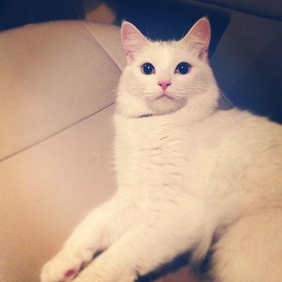 Meko loves to come get stoned with me!  420 420365247 Guyswhosmokeweed kitty minx catswhosmokeweed