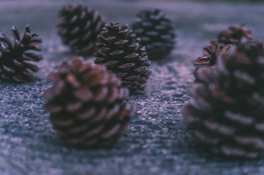 AMPt_community EyeEm EyeEm Best Shots Japan Beauty In Nature Brown Close-up Coniferous Tree Day Food Freshness Growth Land Marine Natural Pattern Nature No People Outdoors Pattern Pine Cone Plant Selective Focus Shootermag Shot Of The Day Still Life Surface Level Textured  Tranquility