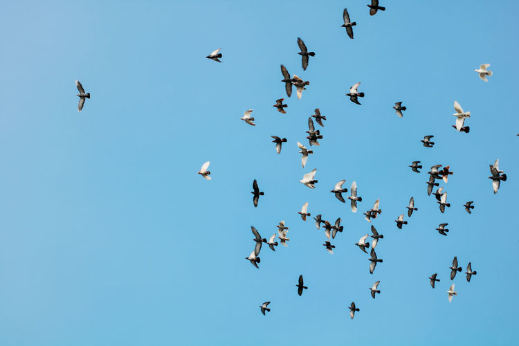 Low angle view of birds flying in the sky