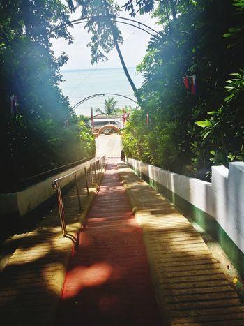 300 steps Tree Shadow Sunlight Sky