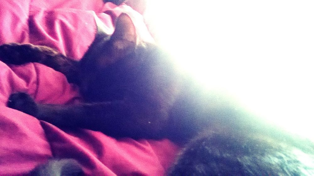 Cat On My Bed Cutie Asleep