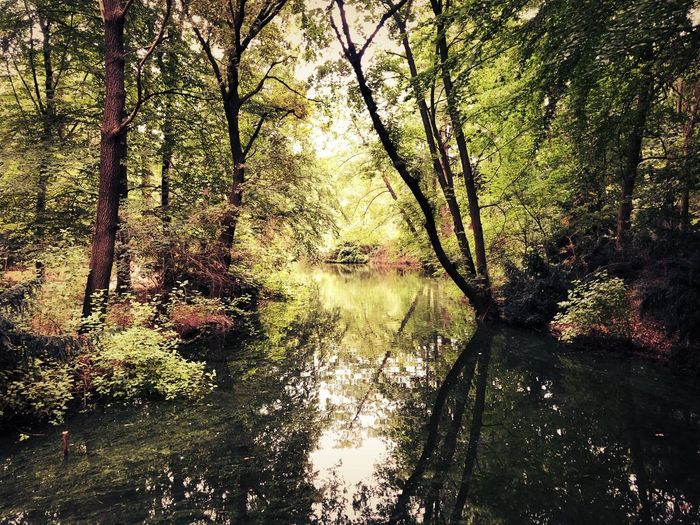 Scenic view of lake amidst trees in forest
