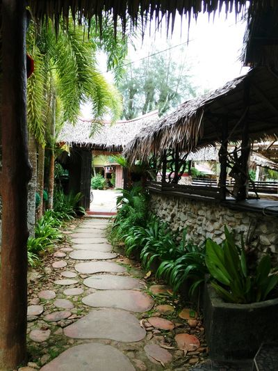 Footpath Kampung Style Malaysian Villages Day Northborneo Shrubs Attap Rooftops And Stony Footpath Malaysian Kampung