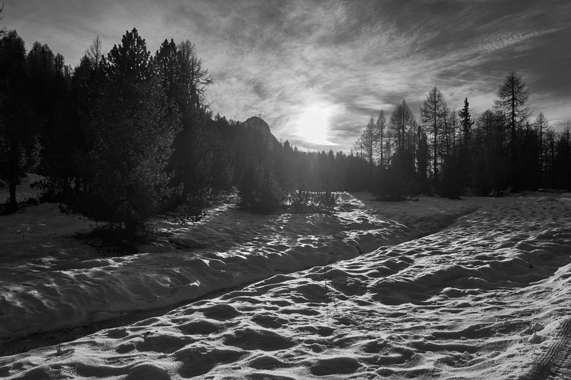 Tree Nature Landscape Sky Cloud - Sky Outdoors Beauty In Nature No People Cold Temperature Day Winter Wintertime Winterwonderland Tranquility Beauty In Nature Black & White Black And White Blackandwhite Alps Switzerland Alps Snow Wilderness Area Travel Mountain Dramatic Sky