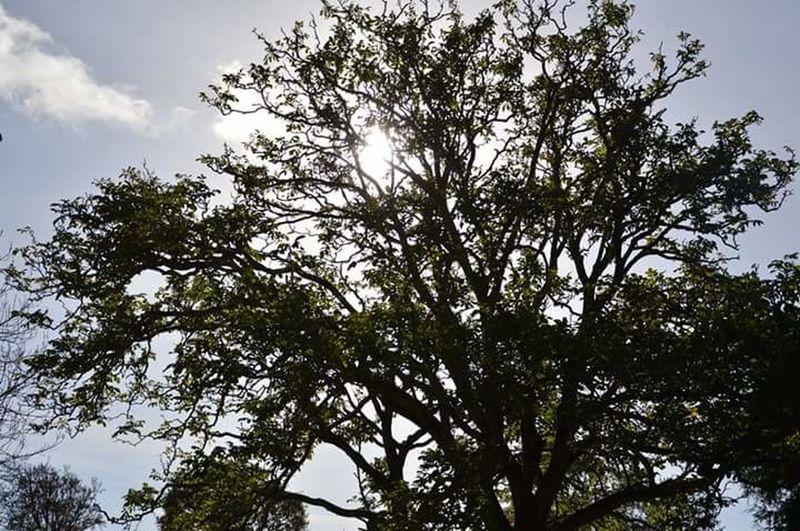 Sunlight ☀ Sun Trees Autumn🍁🍁🍁 Autumn Nofilter#noedit Sun Beyond Leaf Enjoying Life Relaxing