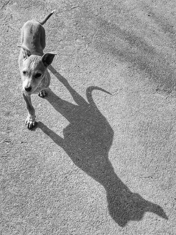 dog puppy The Week on EyeEm The Week on EyeEm Dog Puppy EyeEm Best Shots EyeEmNewHere EyeEm Gallery Dogs Of EyeEm EyeEm Bnw Blackandwhite Monochrome Shadows & Lights Beauty Within Brave Bold Sunlight Streetphotography Inda Dogslife Dogoftheday Photooftheday Quotes Light And Shadow High Angle View Sunlight Day Outdoors Low Section