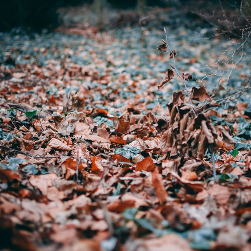 Autumn Beauty In Nature Change Close-up Day Dried Dry Fall Falling Field Land Leaf Leaves Natural Condition Nature No People Outdoors Plant Plant Part Selective Focus Surface Level Tranquility Tree