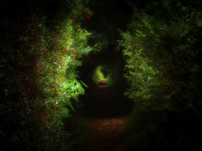A tunnel-like path in the forrest Background Black Colorful Vivid Countyside Dark Fantasy Forest Vivid WoodLand Wilderness Vanishing Point Tunnel Soft Wallpaper Walking Mystic Outdoor Rural Nobody Path Road Nature Non-urban Green