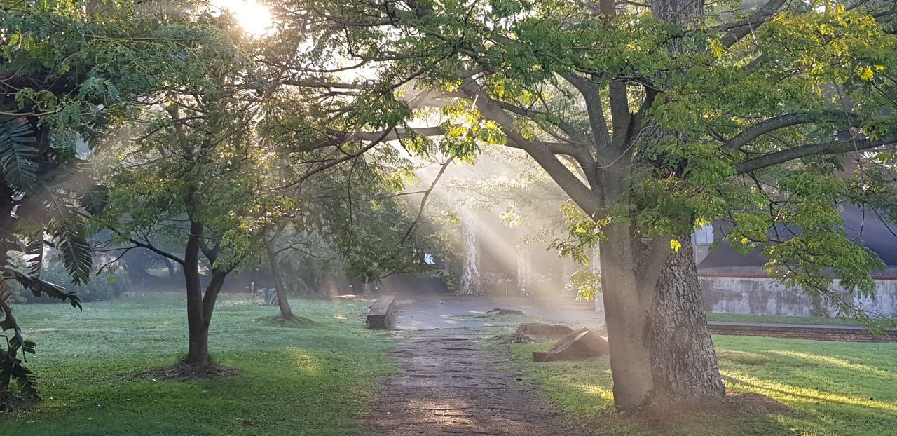 tree, plant, nature, beauty in nature, growth, sunlight, tranquility, park, day, trunk, tree trunk, tranquil scene, no people, fog, branch, outdoors, road, the way forward, footpath, park - man made space, treelined, streaming