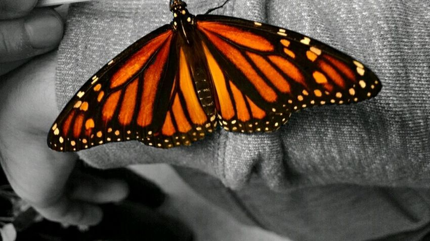 Insect Wildlife Close-up Butterfly Natural Pattern Butterfly - Insect Orange Color Nature Animal Wing Beauty In Nature Animal Antenna Extreme Close-up Animal Themes One Animal Animal Markings Focus On Foreground First Eyeem Photo