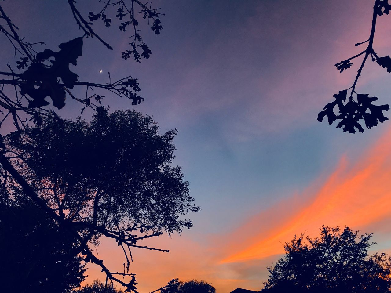 tree, silhouette, sunset, sky, low angle view, nature, beauty in nature, growth, branch, no people, outdoors, scenics, day