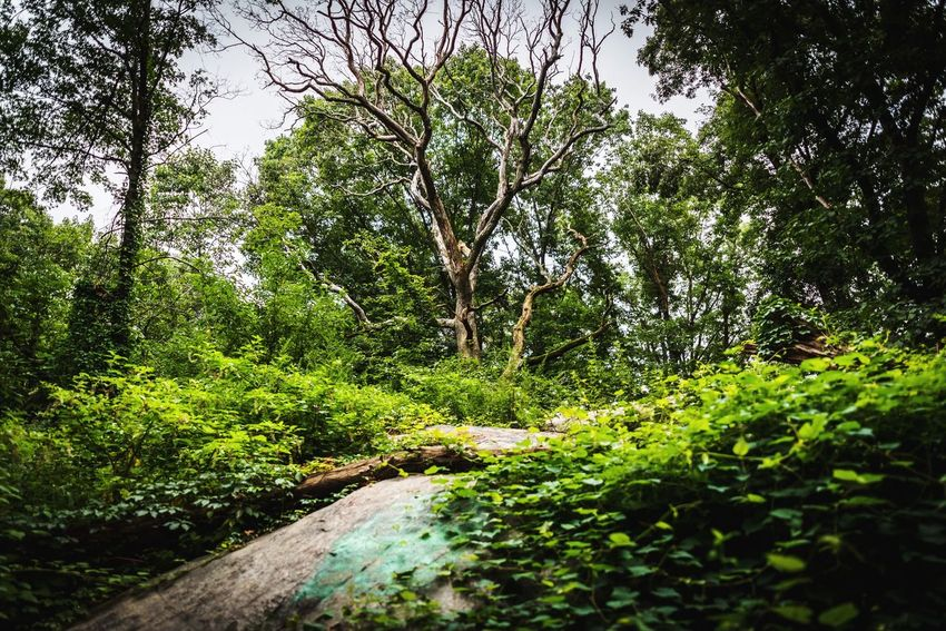 Plant Tree Green Color Growth Nature Water No People Beauty In Nature Day Tranquility Forest Outdoors Wet Lush Foliage Foliage Land Drop Scenics - Nature Tranquil Scene Rain