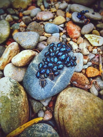 Bugs Close-up Bugslife Outdoors Nature Beauty In Nature Shapes In Nature  Textured  Views Natural Condition Layers And Textures Scenic Scenics Perspective View Weathered Backgrounds Leaves Stones Stones And Pebbles Landscape Geology