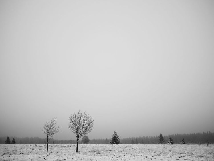 Snow Winter Cold Temperature Nature Black And White Friday Monochrome Scenics Winter Ardennes Belges Ardennes Tranquility Landscape Outdoors Travel Destinations No People Tranquility Mammal Tree Beauty In Nature Day Wilderness Area Sky