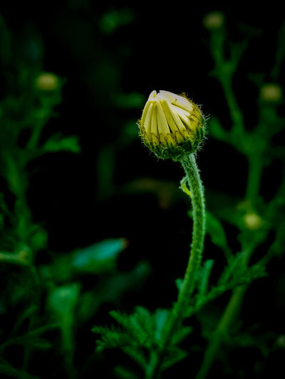 Flower UnderSea Insect Yellow Biology Close-up Animal Themes Plant Green Color The Mobile Photographer - 2019 EyeEm Awards My Best Photo