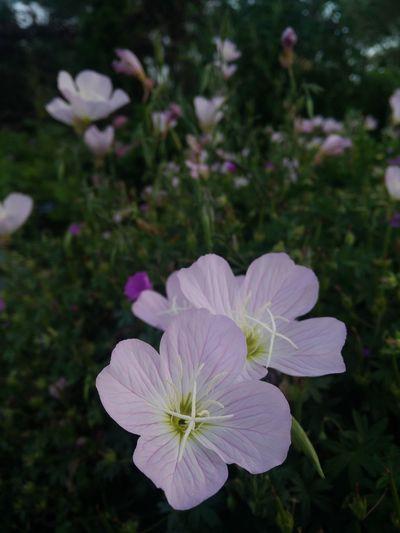 Duo Flower