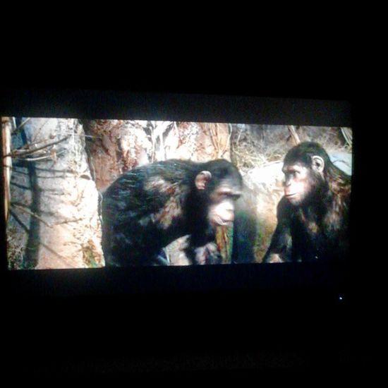 Assistindo Planetadosmacacosaorigem Filme Filmes movie movies macacos ótimo brasília brasil bsb braxilian df brazil