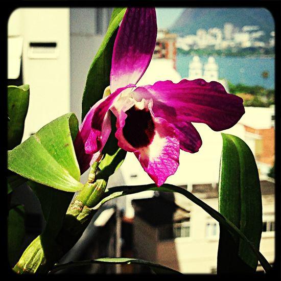Enjoying The Sun Flowers Getting Inspired