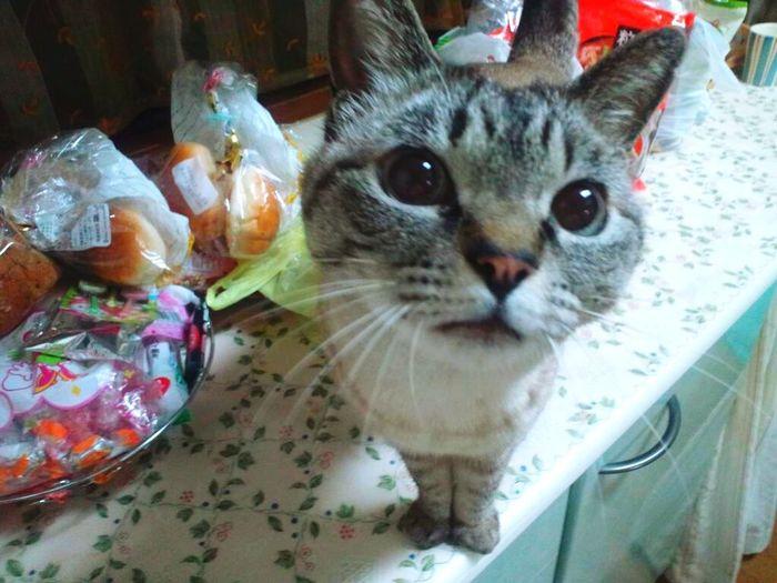 my cat Cat