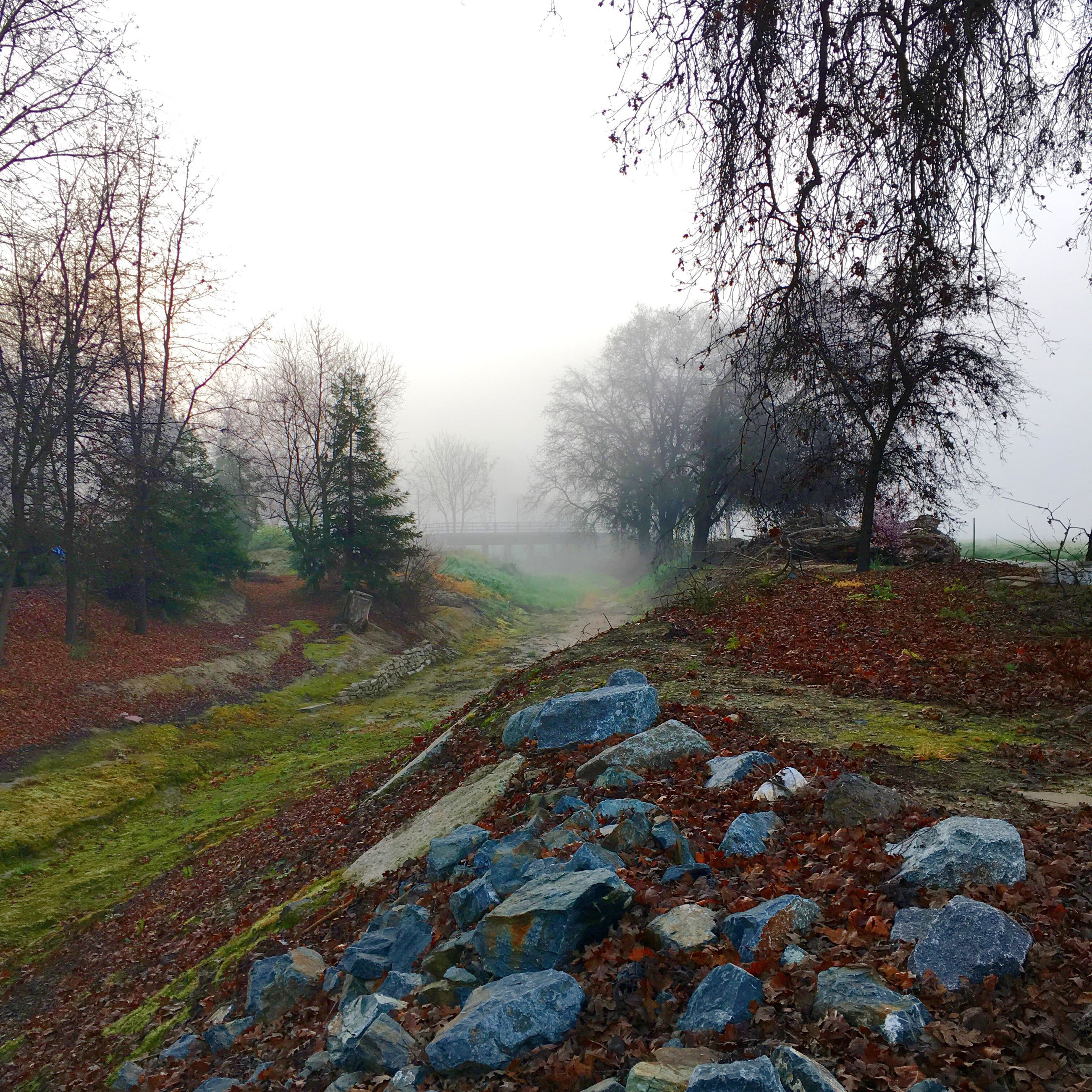 tree, tranquility, tranquil scene, clear sky, landscape, scenics, nature, field, beauty in nature, bare tree, weather, foggy, non-urban scene, grass, sky, season, day, growth, outdoors