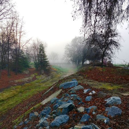 Cottonwood creek Nature California Visalia Trees Fog IPhoneography The Great Outdoors With Adobe
