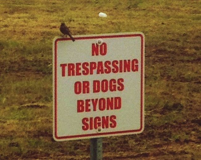 Does not apply to all Foggy Mountain View, Echoloria2 bird sign