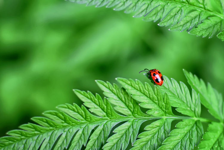 Tiny Insects Animal Wildlife Animals In The Wild Close-up Focus On Foreground Green Color Insect Invertebrate Ladybug Leaf No People One Animal Outdoors Plant Part Small