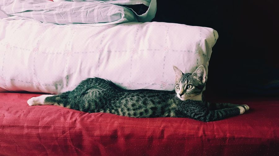 Cat relaxing on bed at home