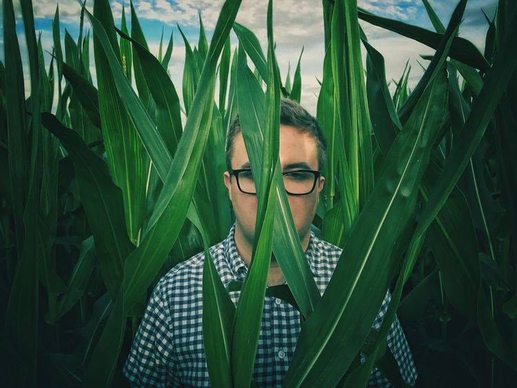 A young man or male standing and hiding on a field full of tall maize or corn plants whilst wearing glasses and looking straight at the camera. Green Color Leaf Young Adult Growth One Person Eyeglasses  Outdoors Real People Nature Maize Corn Field Fields Hide Hide And Seek Hiding Hiding From The World Waiting Lost Nervous Alone Abandoned Leftbehind Tall Portrait Lost In The Landscape