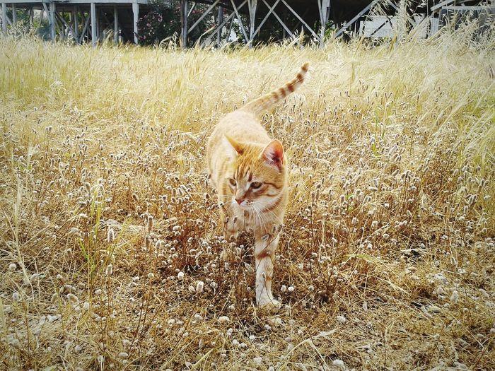 Cat Pet Animals Wildcat Kedi Autumn Colors EyeEm Nature Lover