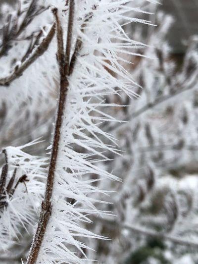 Ice Needles
