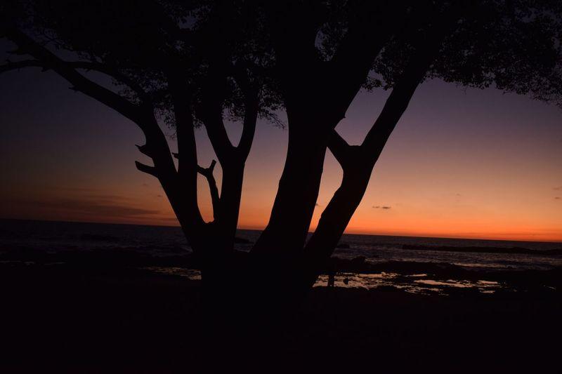 Sunset Tree Beach First Eyeem Photo