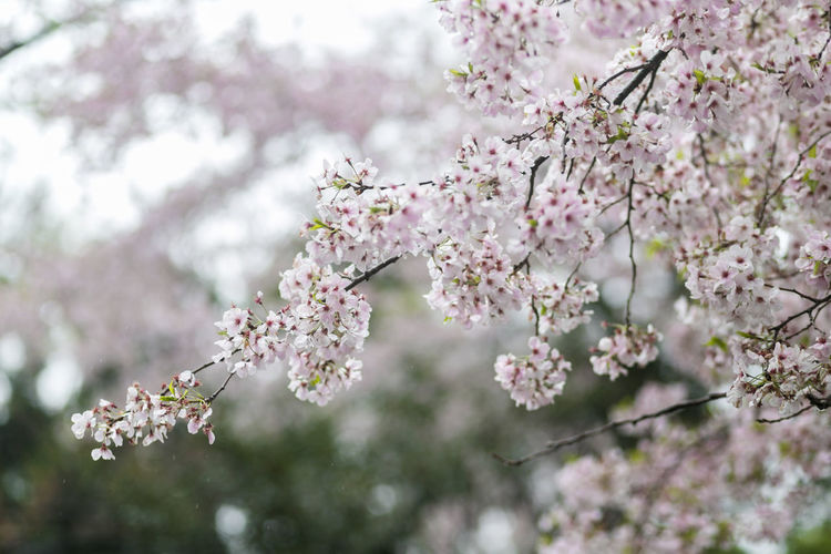 Close-up of blossoms blooming in spring