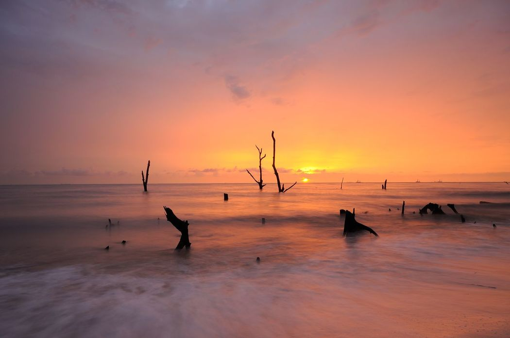 death trunk at the beach during sunset Death Tree Wood Beach Beauty In Nature Bird Day High Tide Nature No People Outdoors Scenics Sea Sea And Sky Sky Sunset Sunsets Tranquil Scene Tranquility Trunk Water Colour Your Horizn