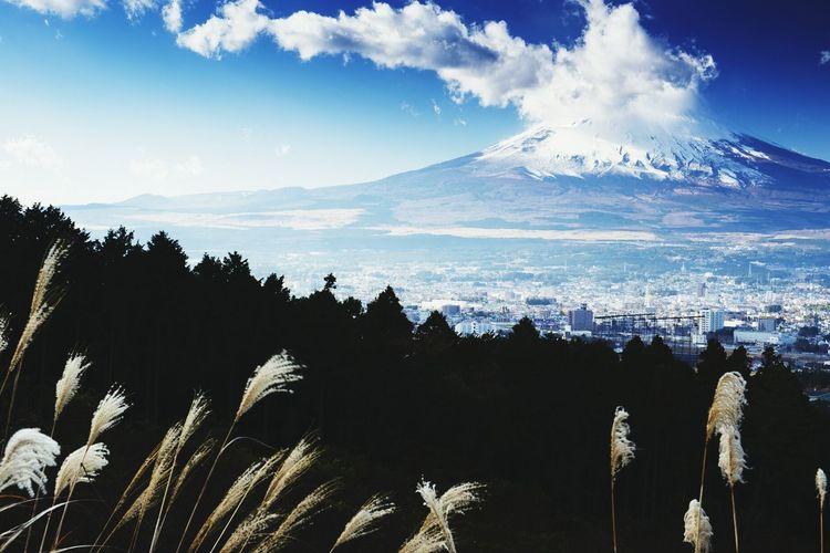 Winter White by CanvasPop Japan Fujisan Landscape Winter White By CanvasPop