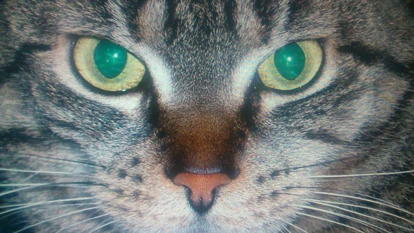 Mia ... Cat♡ Catlovers Cateyes TigerCat Getting In Touch Taking Photos Miau Pets Pureshot Pure Photo