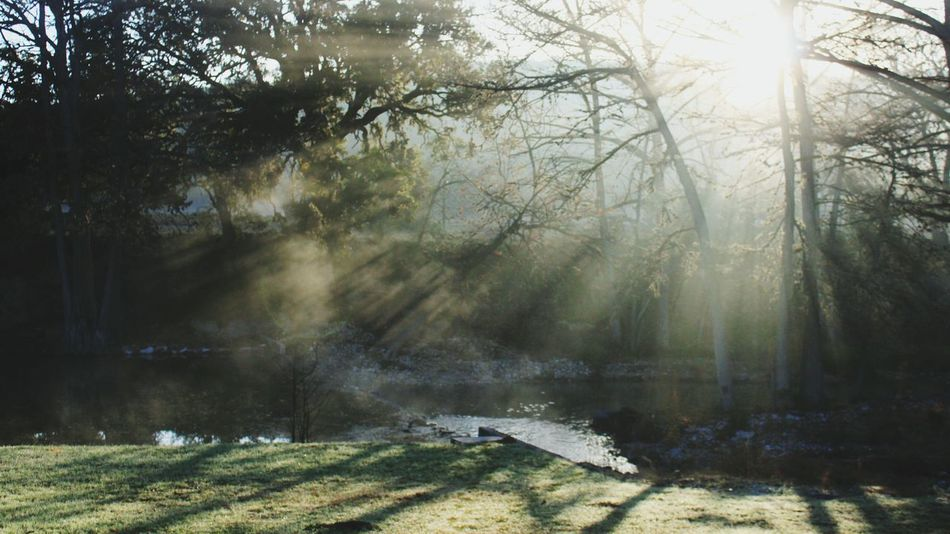 Fog Foggy Morning Sunrise Rays Of Sunshine Landscape Hill Country Silhouette Light And Shadow Things I Like The Great Outdoors - 2016 EyeEm Awards