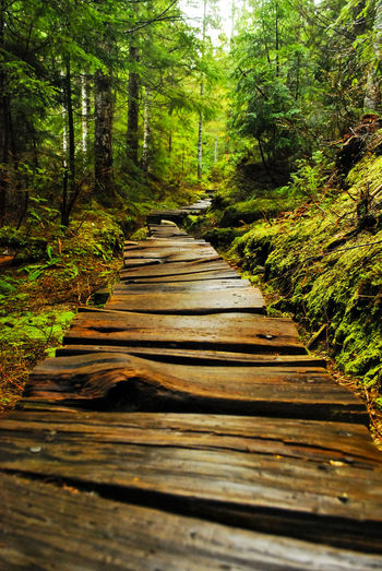 Boardwalk Cascades Mountains Forest Nature No People Trail Tranquil Scene Tree Washington Wood - Material