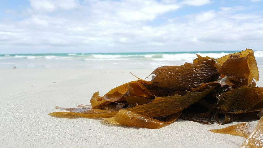 Beach Sea Sand Horizon Over Water Horizontal Sky Close-up Outdoors Nature Seaweed Seaweed At The Beach Oceanscape Ocean Photography Indian Ocean Australia Ocean_collection Clouds And Sky Clouds Sea_collection No People Beauty In Nature Cloud - Sky Tranquility Tranquil Scene Scenics